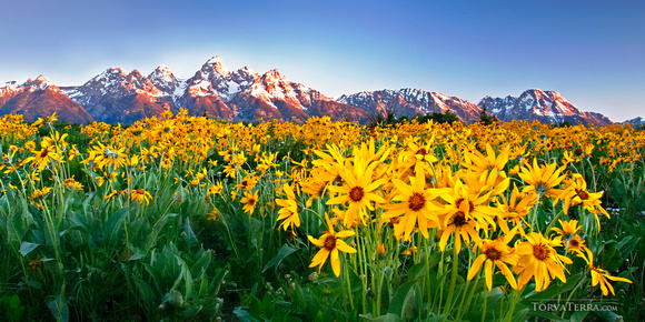 Alpenglow and Wildflowers